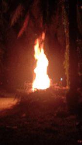 Api menjulang tinggi dan hampir menyambar daun-daun pokok kelapa sawit